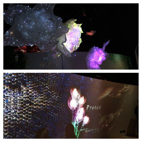 モザイクフラワーズ花画像
