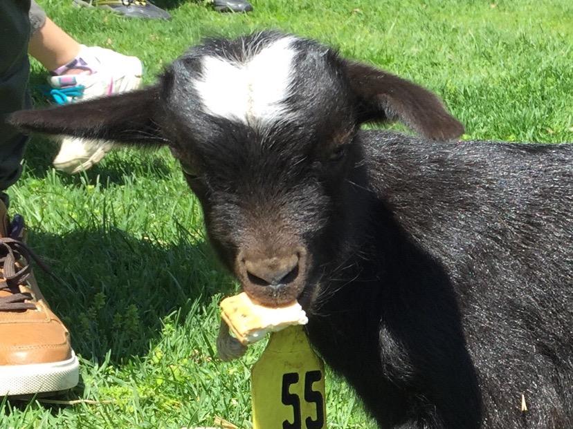 カンパンを加える仔羊