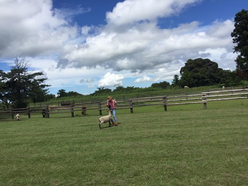 牧場の絶景