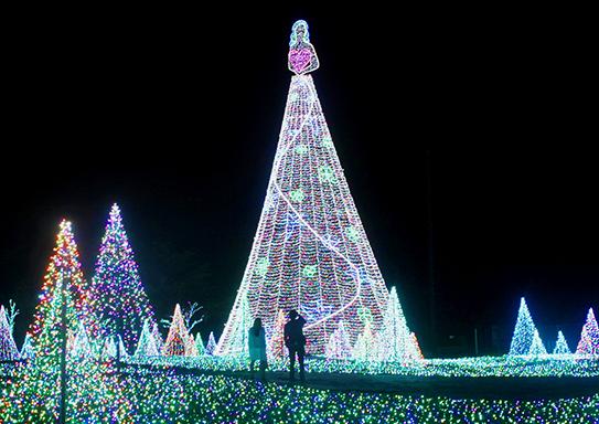 よみうりランドフォレストエリア|女神のツリー