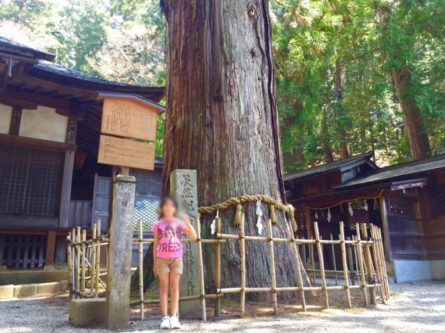 飛騨高山 天然記念物の大杉