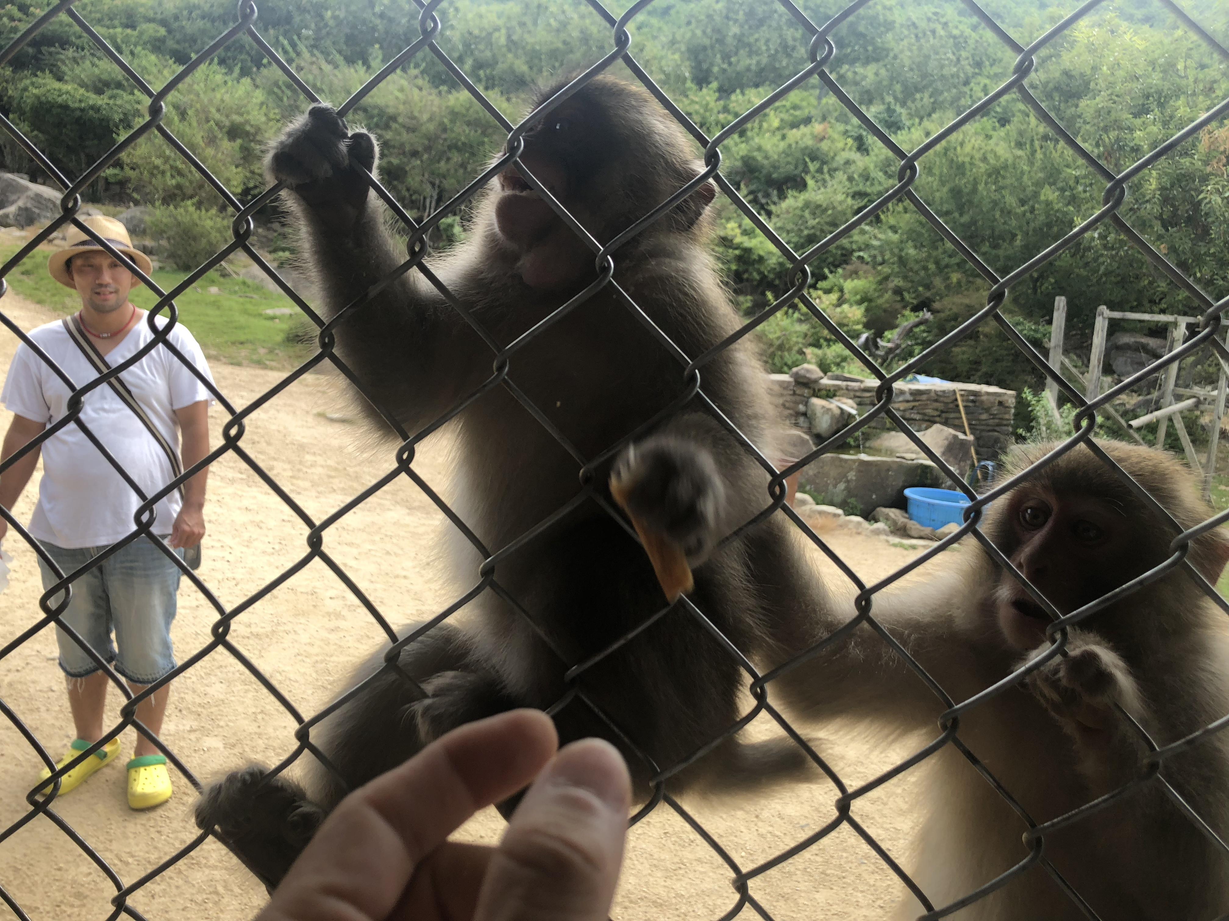 檻の中から猿の餌やり